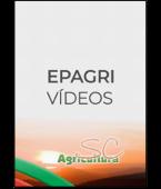 Card-video